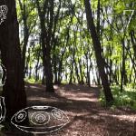 Piknik i koncert u šumi